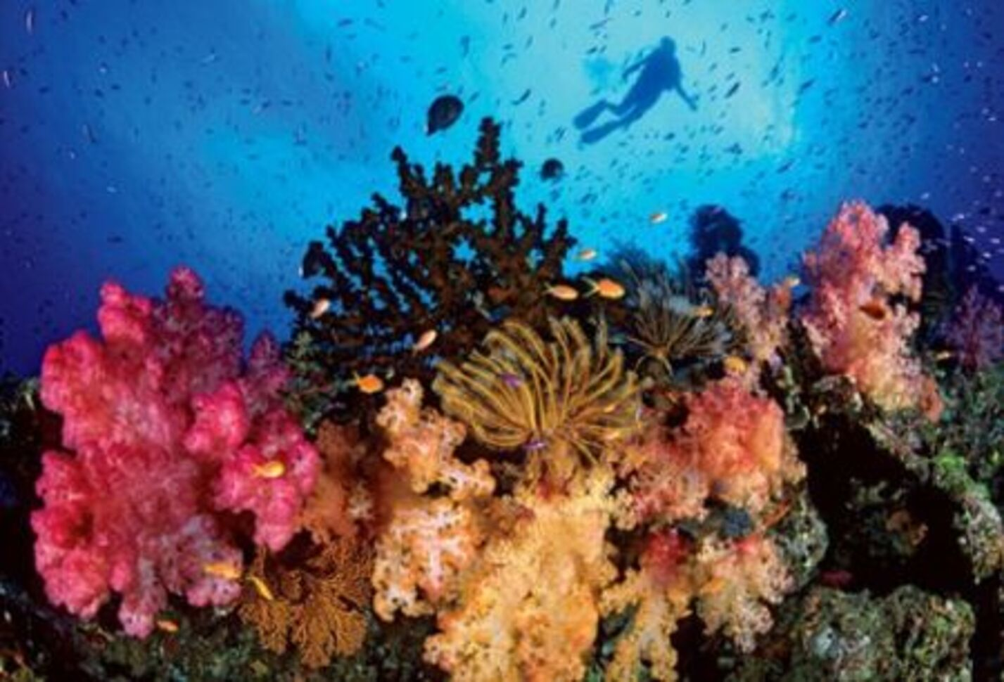 Scrumble du mois d'août : plongée sous-marine