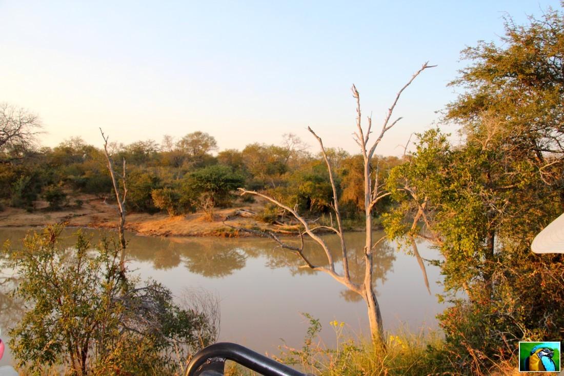 AFRIQUE du SUD: juin 2018: Allez debout, pour une nouvelle découverte dans la savane