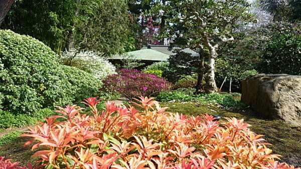 Jardins Albert Kahn 116