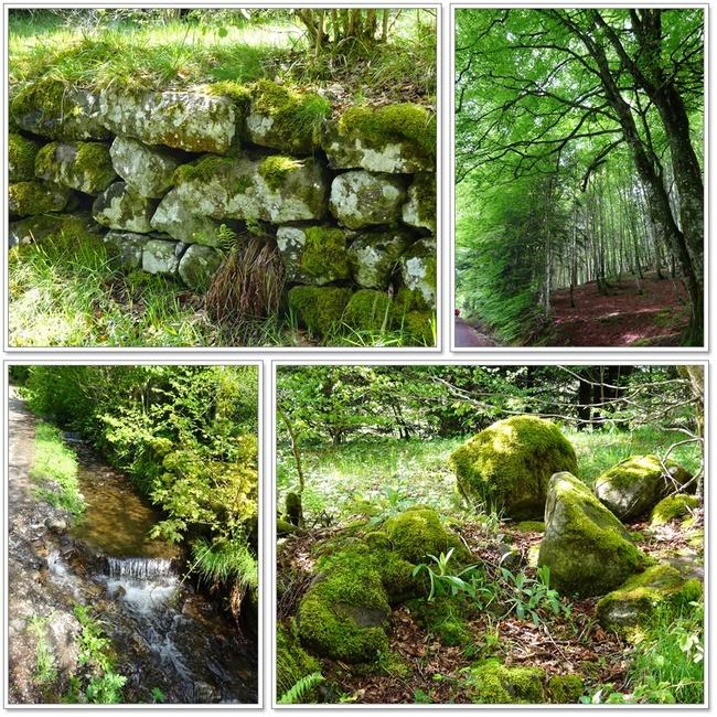 Balade en Auvergne - 5