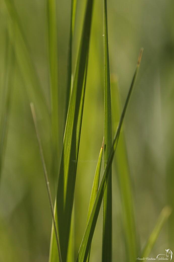 Le nez dans l'herbe