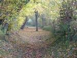 La randonnée du 19 novembre à Dozulé