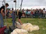 Jobourg fête le mouton
