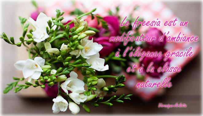 Perle fleurie Freesia