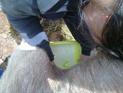 Et si on faisait du fromage de chèvre...