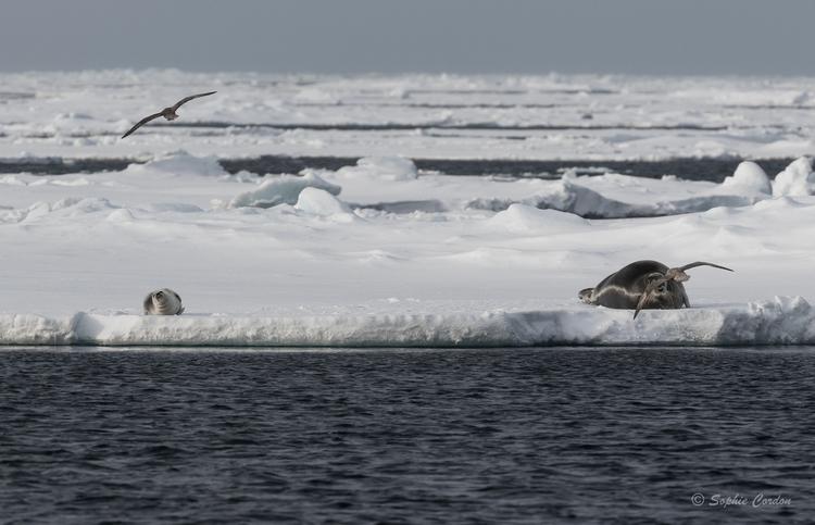 La journée des phoques