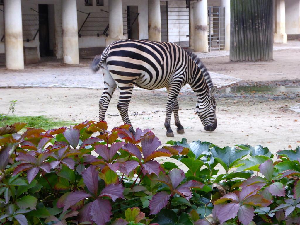 Zoo d Berlin, suite et fin pour 2017!