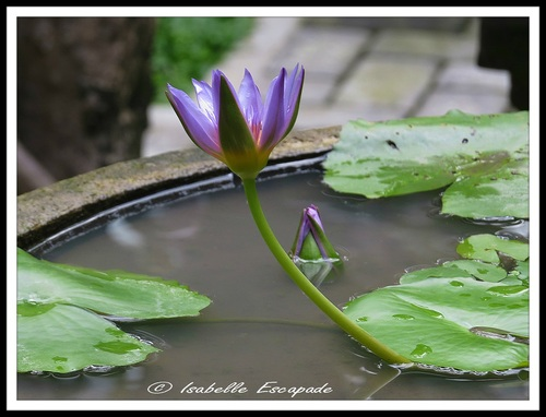 10 Août 2014 - Matin Ganeshou... Après-midi Vallée d'Ayung