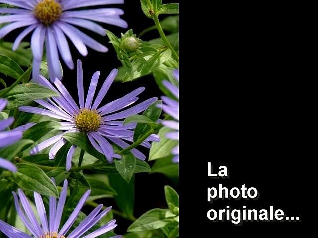 Maldala fleurs septembre 2012 1