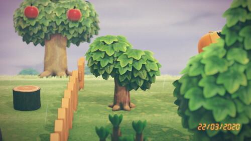 Un arbre qui pousse...