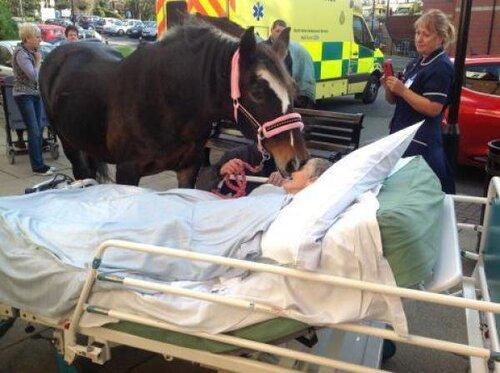 L'adieu bouleversant d'un cheval à sa propriétaire en fin de vie