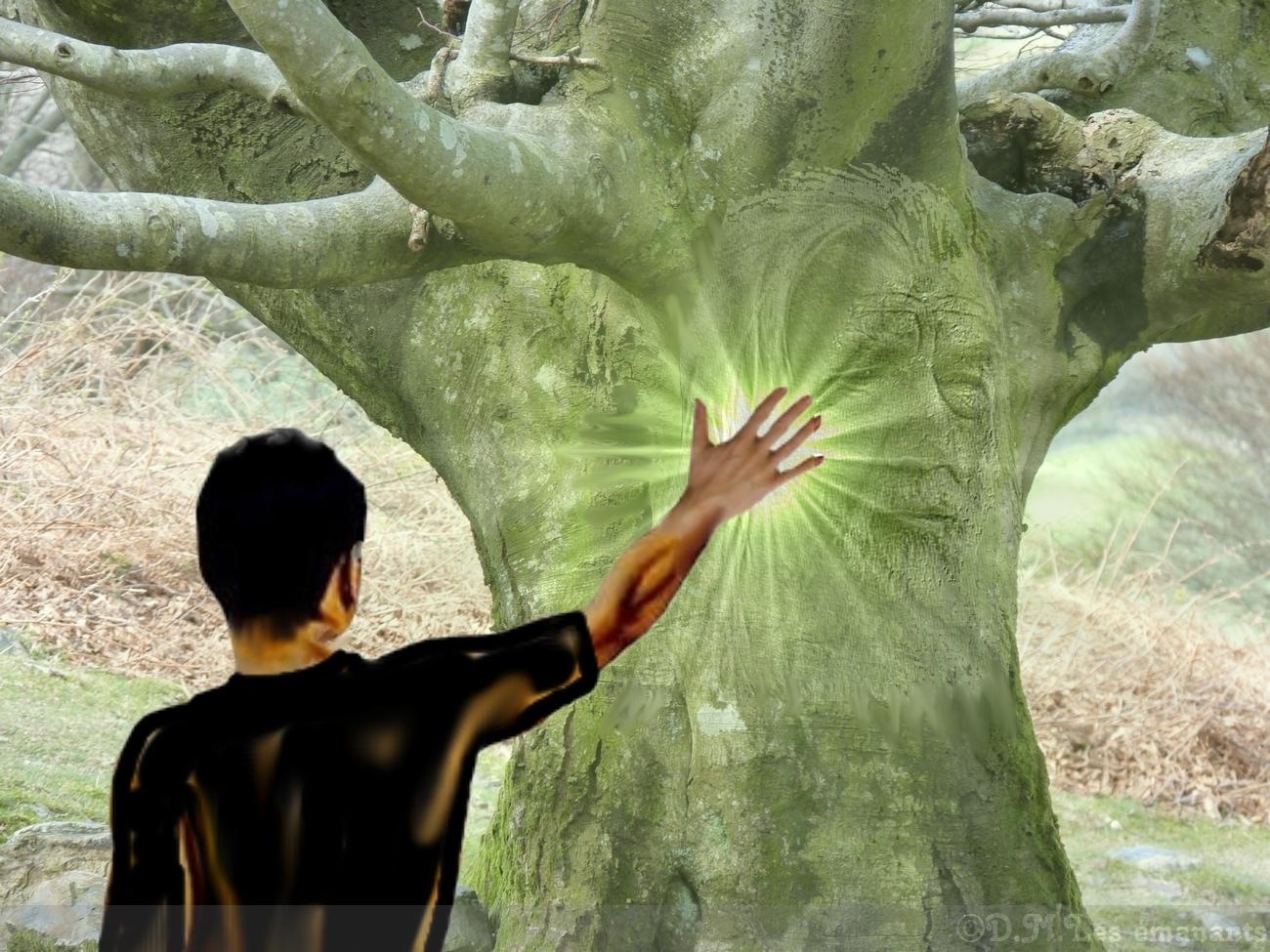 Les Arbres Et Leurs Symboles Les Emanants Messagers De La Nature