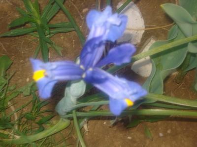 Blog de lisezmoi :Hello! Bienvenue sur mon blog!, une jolie fleur offerte par florencia