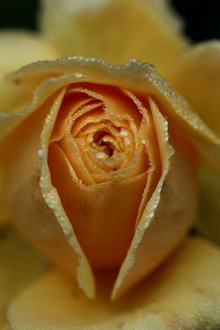 Roseraie - Novembre (2/4)