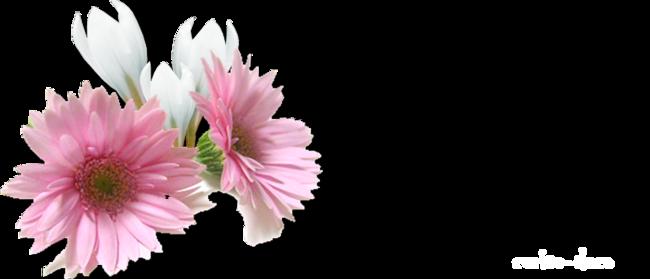design printemps gerbera