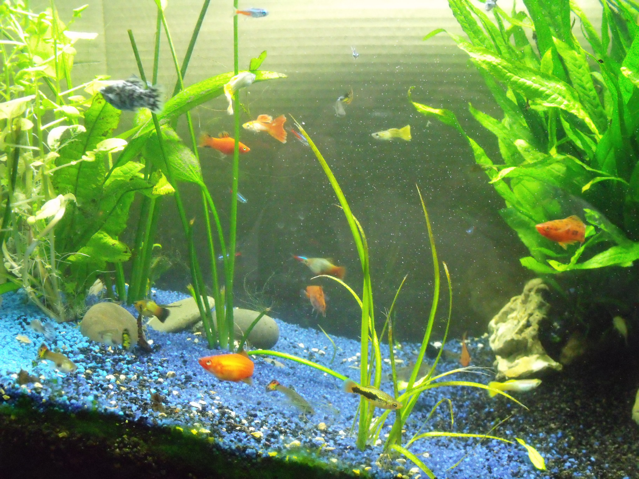 les petits poissons de l 39 cole lacalobra. Black Bedroom Furniture Sets. Home Design Ideas