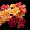 Fleur Bouquet 6.jpg