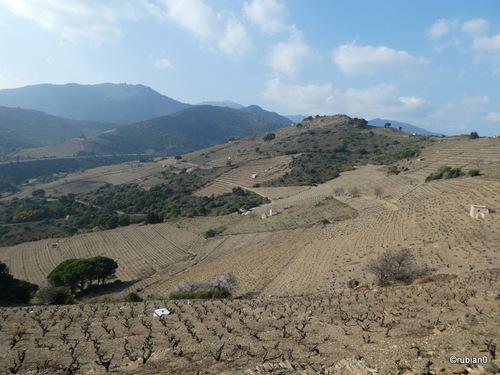 Vignoble de Banyuls-Collioure