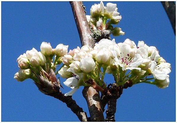 fleurs-du-printemps.jpg