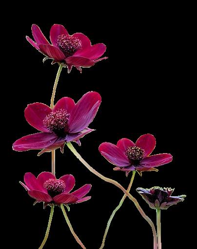 Fleurs