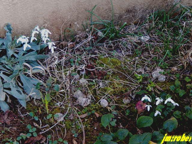 Jardinage: Un début de nettoyage de printemps avant l'heure