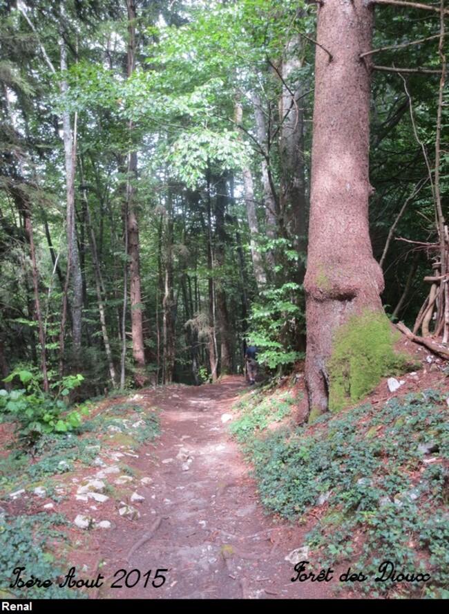 L'hymne à la forêt
