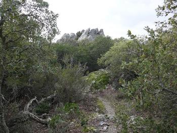Au milieu des arbres et des rochers