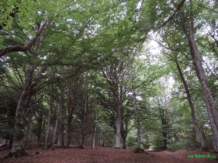 le site du Puy de Dôme (63)