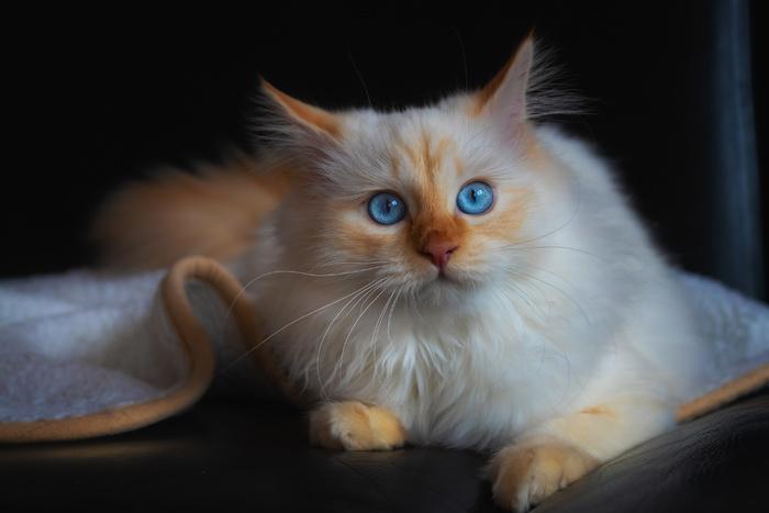 photos de chats divers + autres en HD 24K