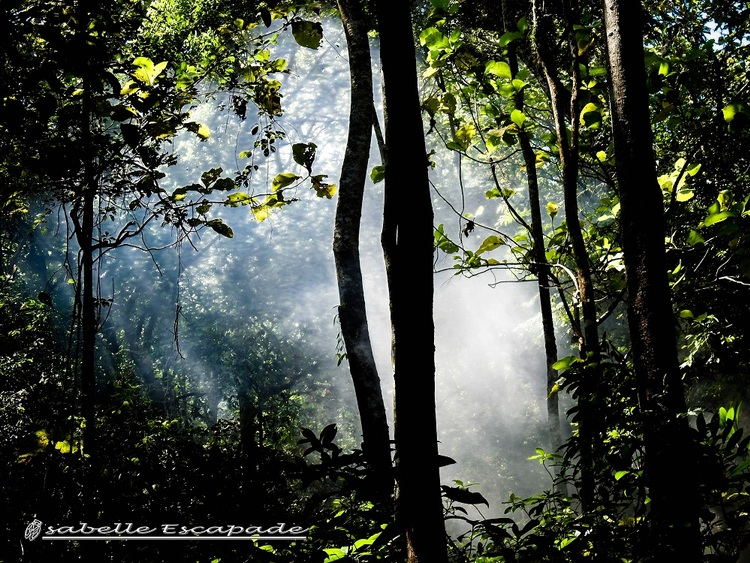 5 Août - PANGANDARAN National Park... Bagus Bagus !