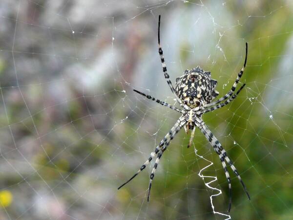 Images insolites de vacances araignée dans la garrigue