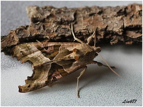Papillons-5063-meticuleuse.jpg