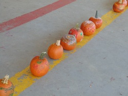 Halloween week - et autres trucs