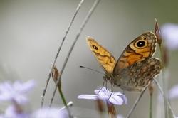 Insectes variés 5 - 2017
