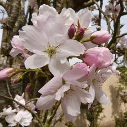 Avril, gentil mois d'avril...