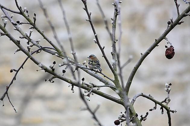 oiseaux-01[1]