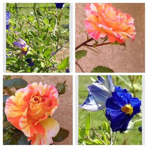 Fleurs et Balade dans la Nature
