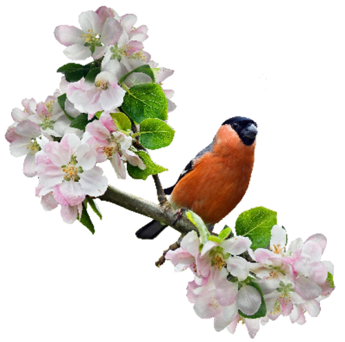 Birds and Spring