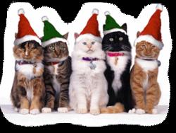 Histoire de Julie et de ses chatons