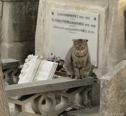 Chercher le chat qui se cache - cimetière d'Avignon