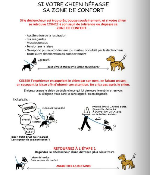 Traiter la peur, la frustration et les agressions chez le chien