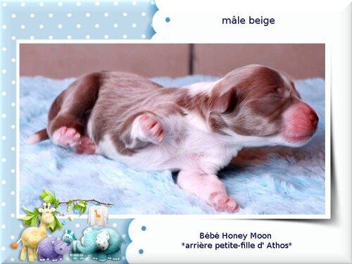 ♥ Bébés d' Honey Moon ♥  *arrière petite-filles d' Athos*