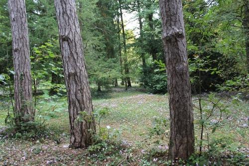 L'arboretum des barres