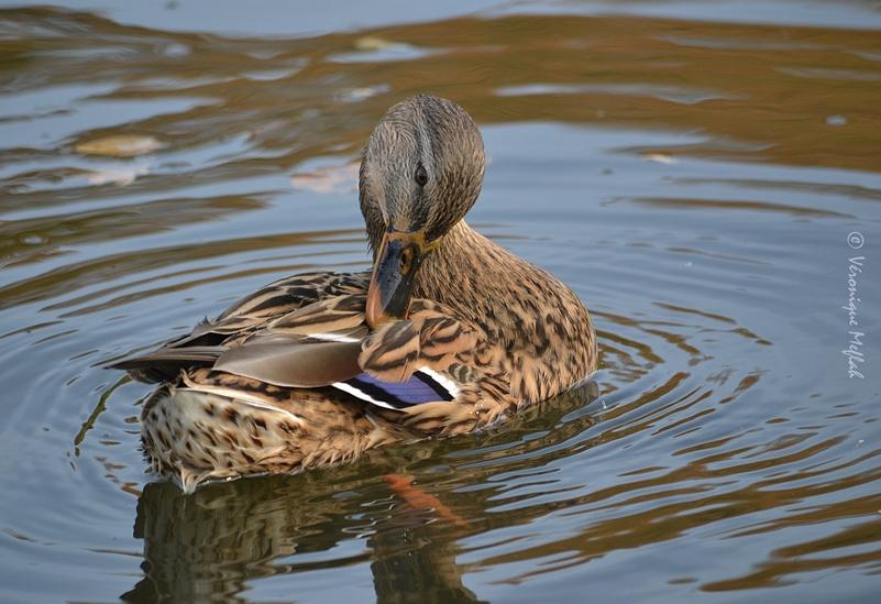 Lac des Minimes : un peu d'histoire