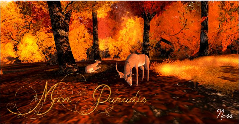 ~ Mon Paradis ~