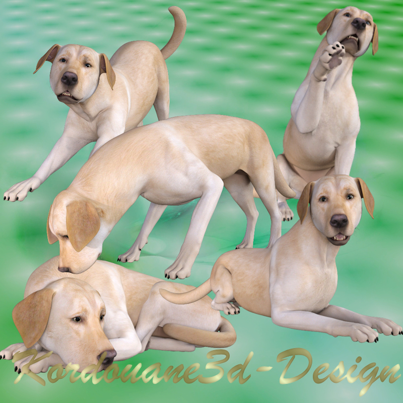 Chien labrador gold (tube-render)