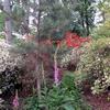IMG_6643 R.jpg
