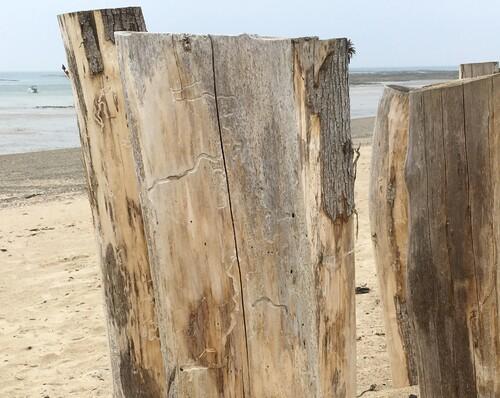 Les surveillants de la plage