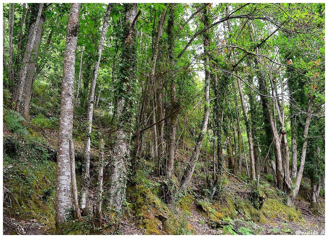 Forêt de Saint-Antoine - Corse