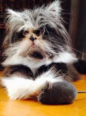 Un chat pas comme les autres